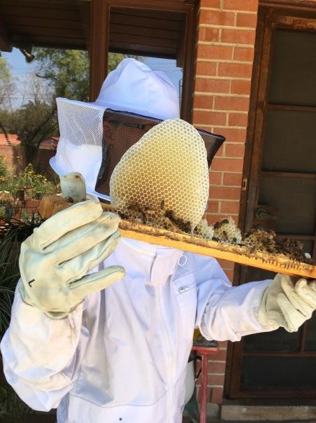 me w honeycomb